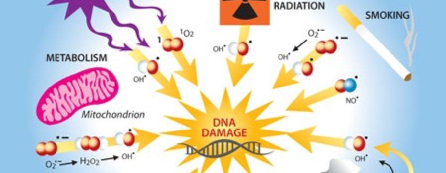 Antioxidant for skin